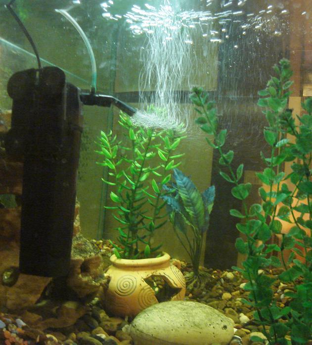 Объявление для аквариумистов: кому нужен фильтр?